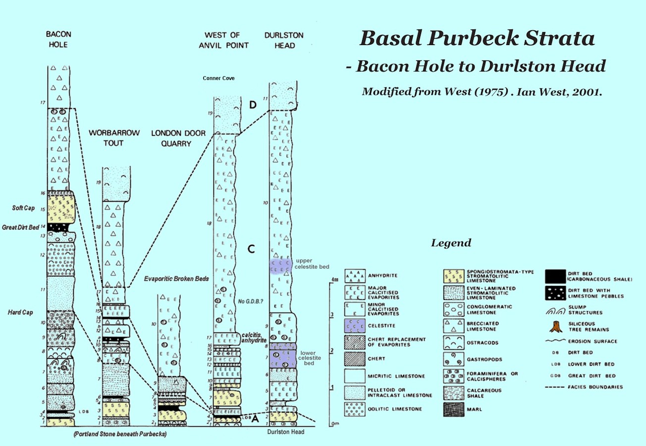 Basal Purbeck, Lulworth Formation, diagram showing correlation of strata in the Anvil Point to Blackers Hole clifs and adjacent region, near Swanage, Dorset, 2013