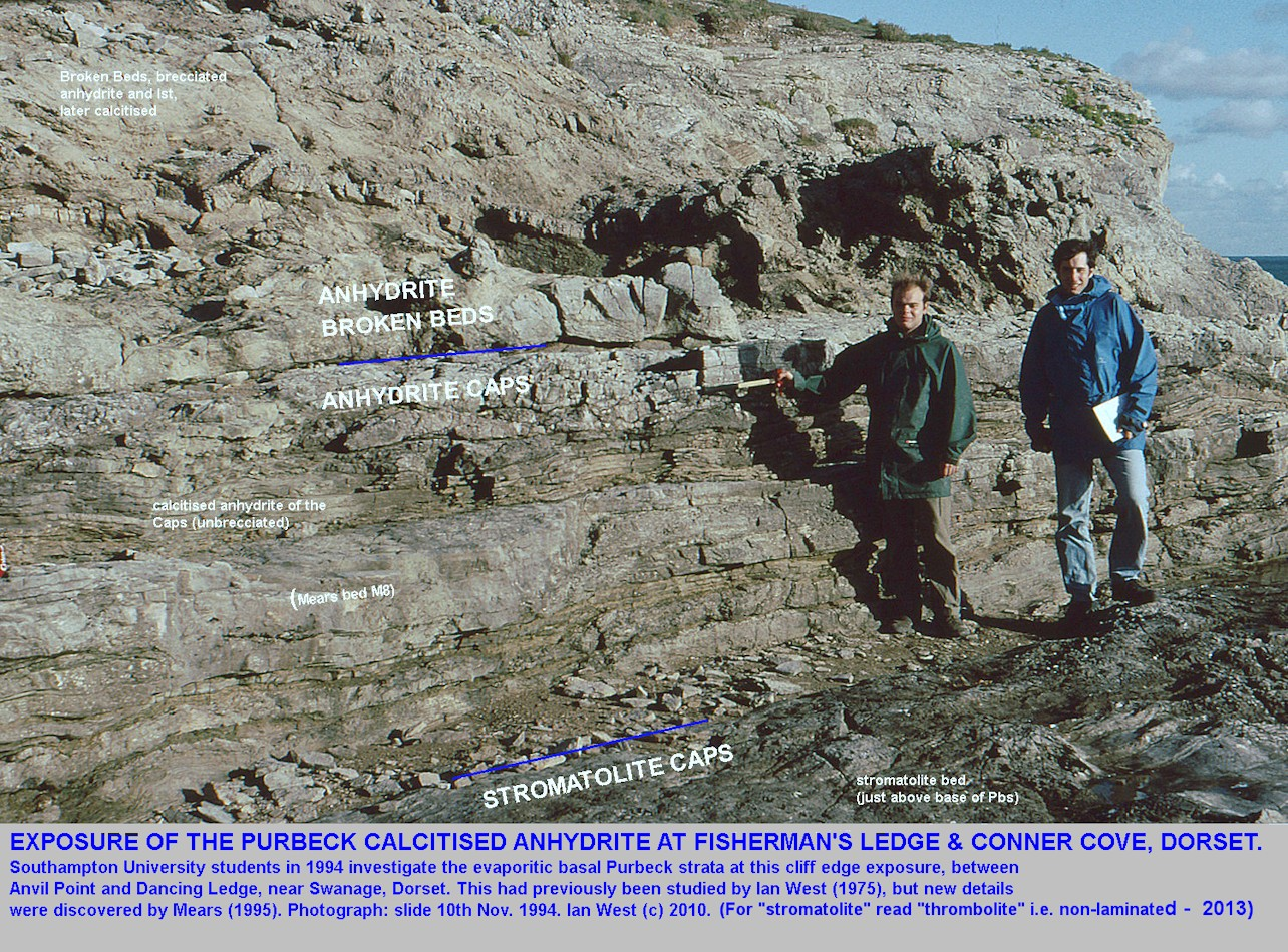 The evaporitic basal Purbeck strata at Fisherman's Ledge and Conner Cove, on the cliff top between Anvil Point and Dancing Ledge, near Swanage, Isle of Purbeck, Dorset, with Adam Mears and another student in 1994
