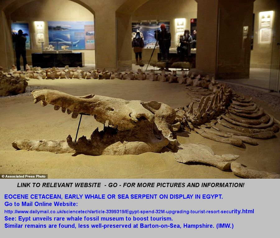 An Eocene whale or cetacean, broadly similar to those from the Eocene of Barton-on-Sea, Hampshire, England and the nearby New Forest, from an Egyptian desert and on display in a museum