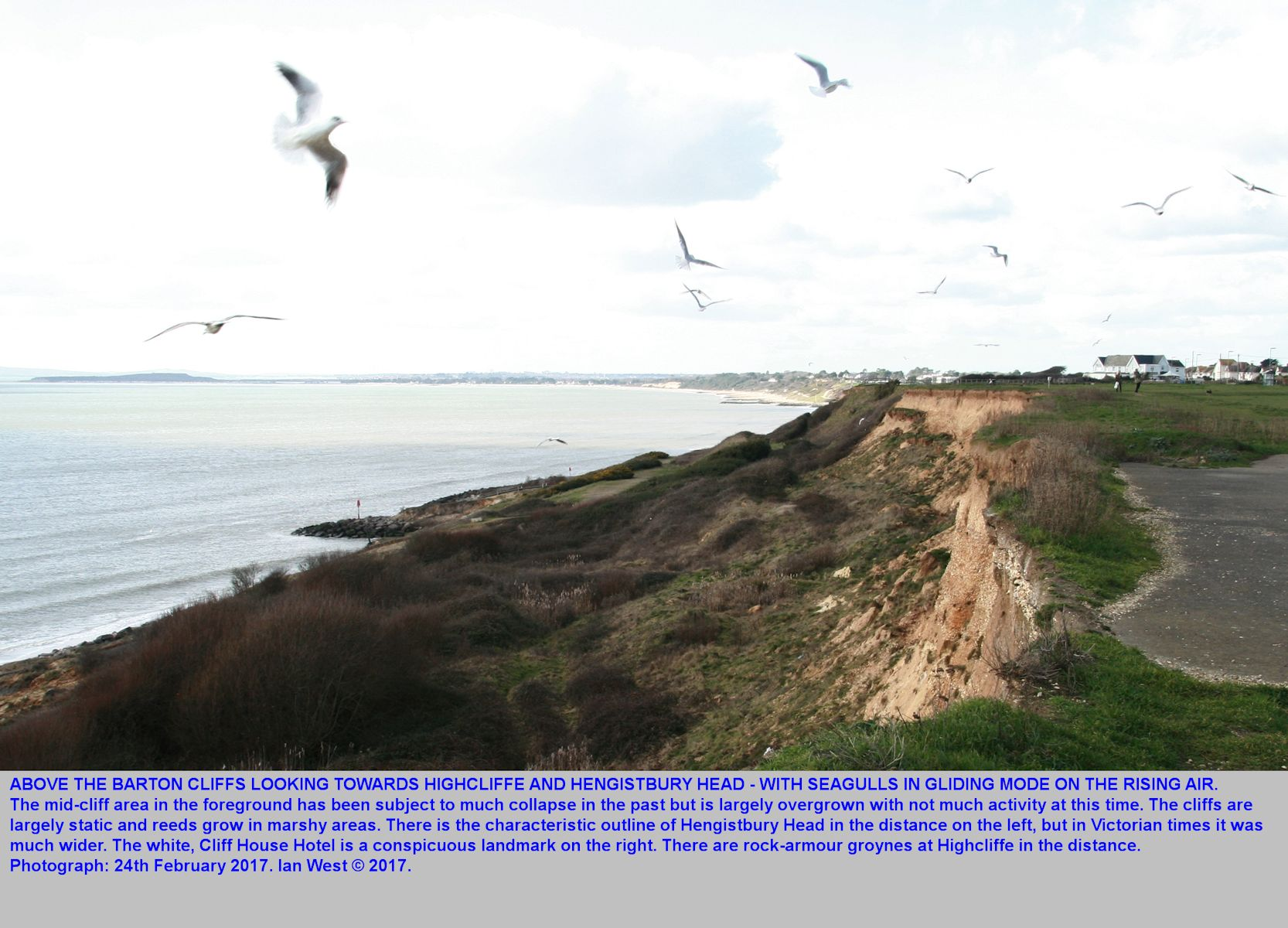 A general view of the cliffs from Barton-on-Sea, Hampshire, in a westward direction, with gulls rising on the cliff thermals