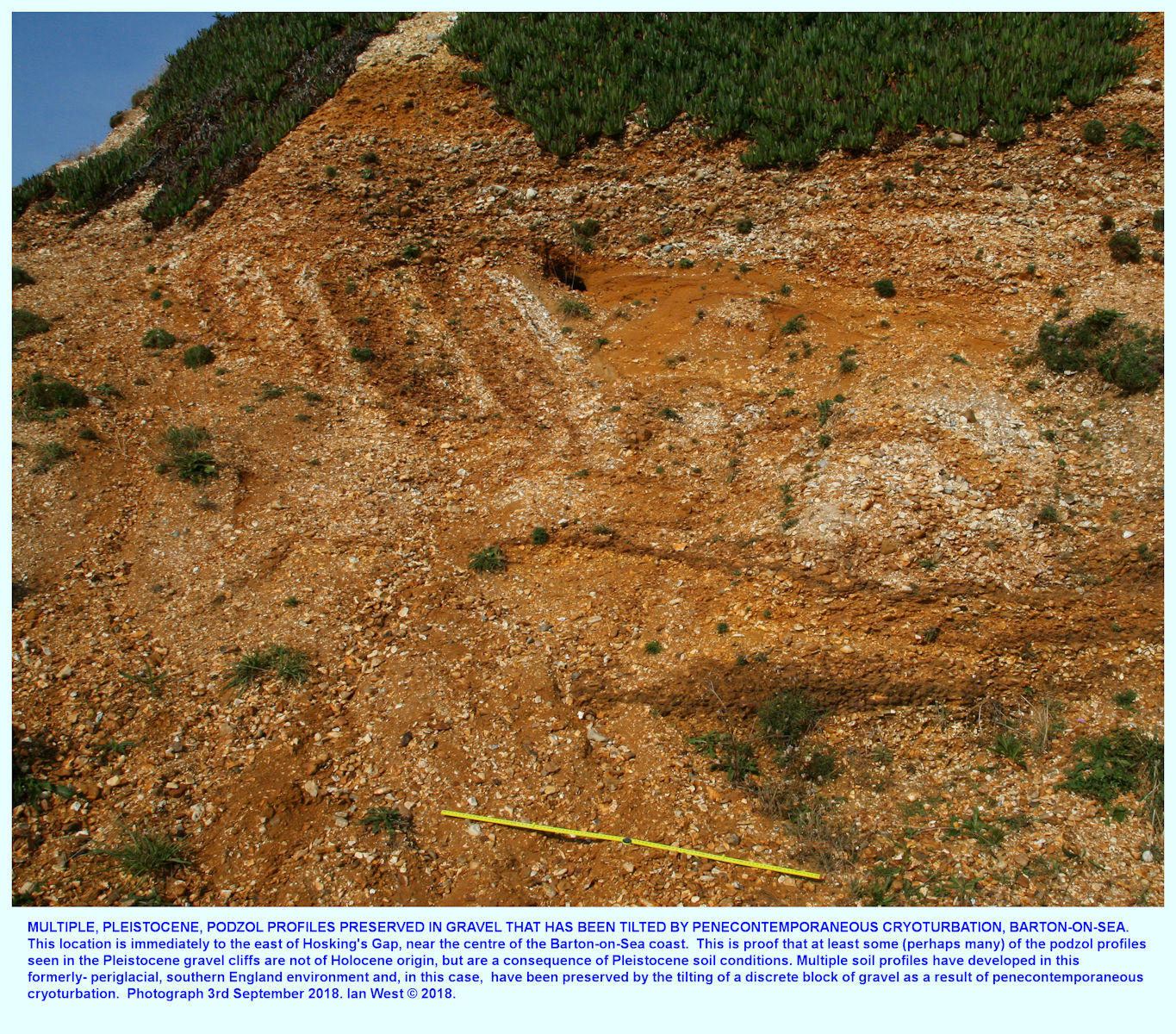 Relatively complex origin of the Pleistocene gravel at Barton-on-Sea, with multiple podzol profiles within a block which has subsequently been tilted by periglacial freeze and thaw, - cryoturbation processes, east side, adjacent to Hoskins Gap, Barton-on-Sea, Hampshire