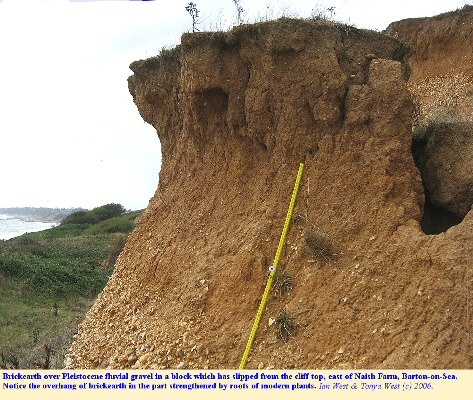 Brickearth above Pleistocene fluvial gravel in a slipped block near the cliff top, east of Naish Farm, Barton-on-Sea, Hampshire