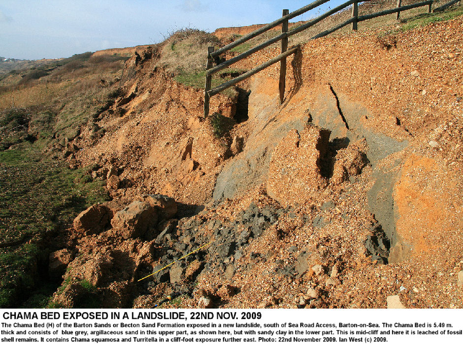 The blue-grey, argillaceous sand of the Chama Bed in a mid-cliff landslide, at Sea Road Access, Barton-on-Sea, Hampshire, 22nd November 2009