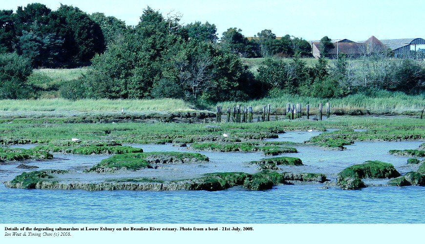 Details of deteriorating saltmarshes at Lower Exbury, east bank, southern part of the Beaulieu River estuary, Hampshire, 21st July 2008
