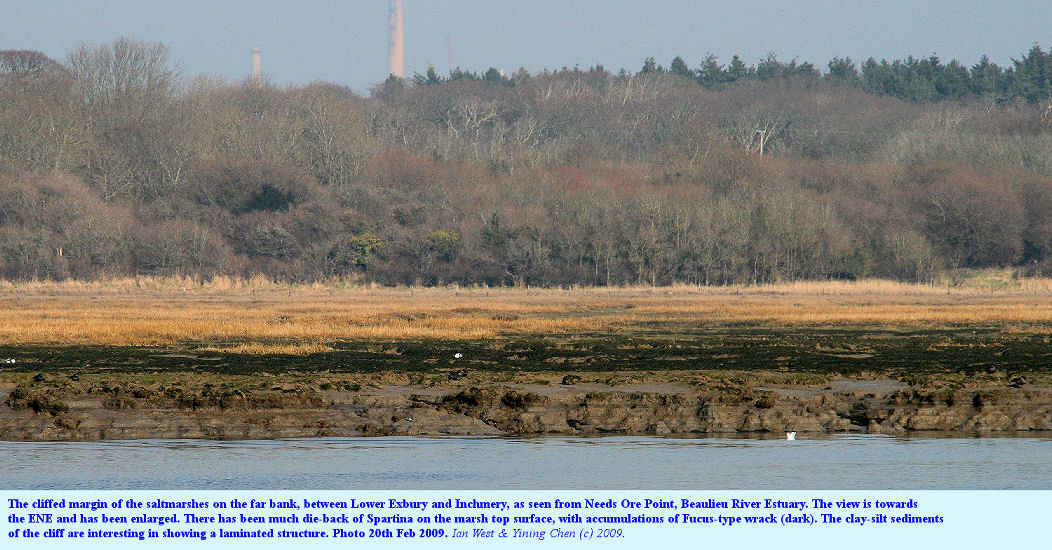 The cliff edge of the saltmarshes between St. Margaret's Creek (Lower Exbury) and the Inchmery area, Beaulieu River Estuary, Hampshire, as seen from Needs Ore Point, enlarged photo February 2009