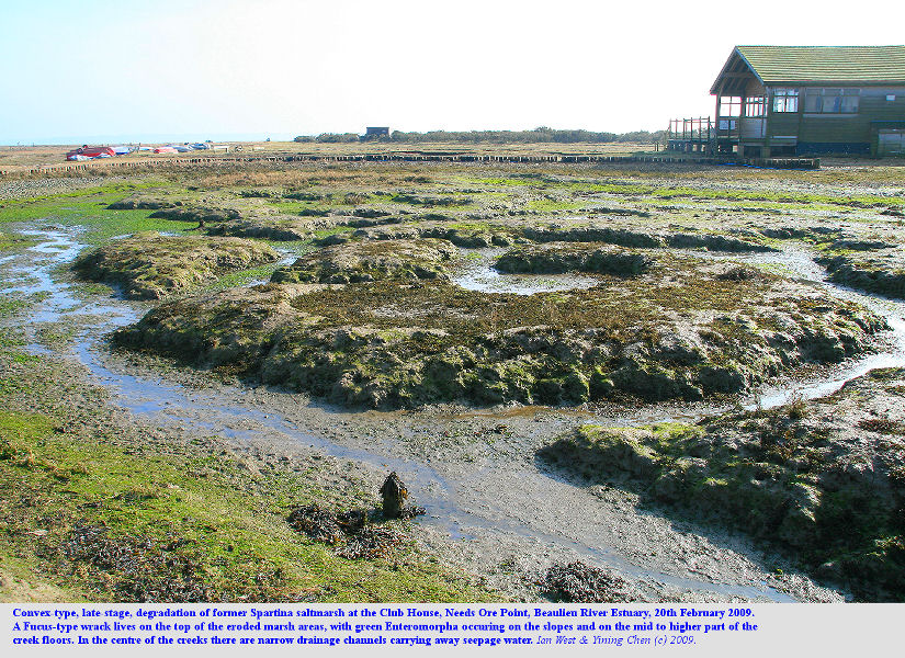 Degraded relics of Spartina saltmarsh near the Club House at Needs Ore Point, Beaulieu River Estuary, Hampshire, February 2009