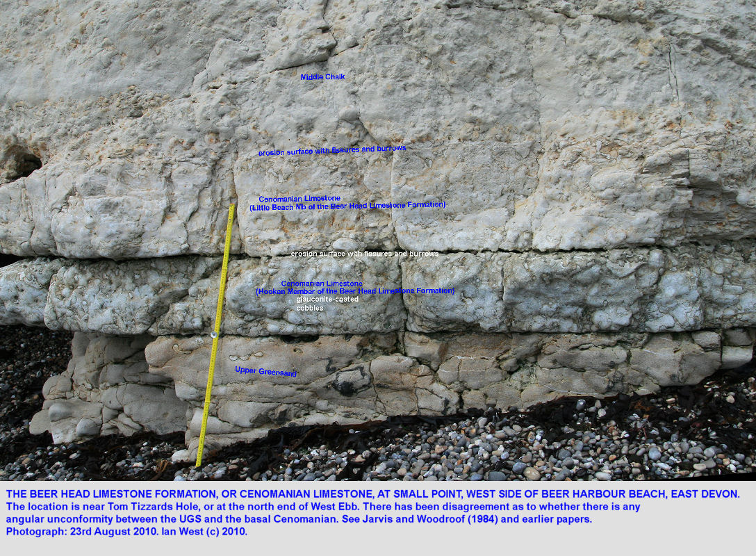 A very thin sequence of Cenomanian Limestone, near  Small Point, Beer, East Devon