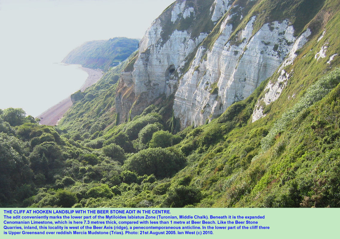 The adit in the Beer Stone, Mytiloides labiatus Zone, the Hooken Landslip, Beer, East Devon, 2005