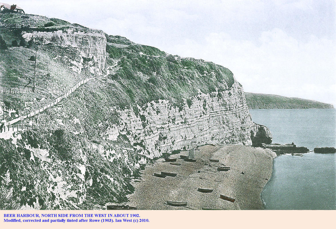 The eastern cliffs of the north side of Beer Harbour, East Devon, in about 1902