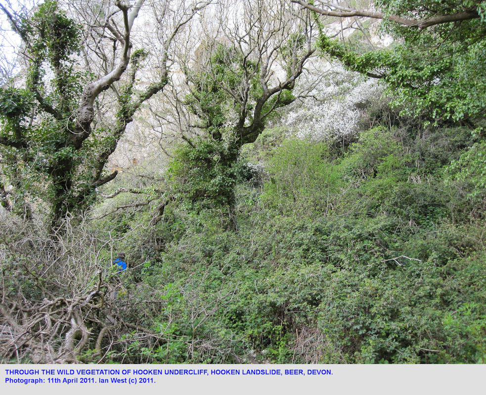 Vegetation on the Hooken Cliff Landslide, Beer, East Devon, 11th April 2011
