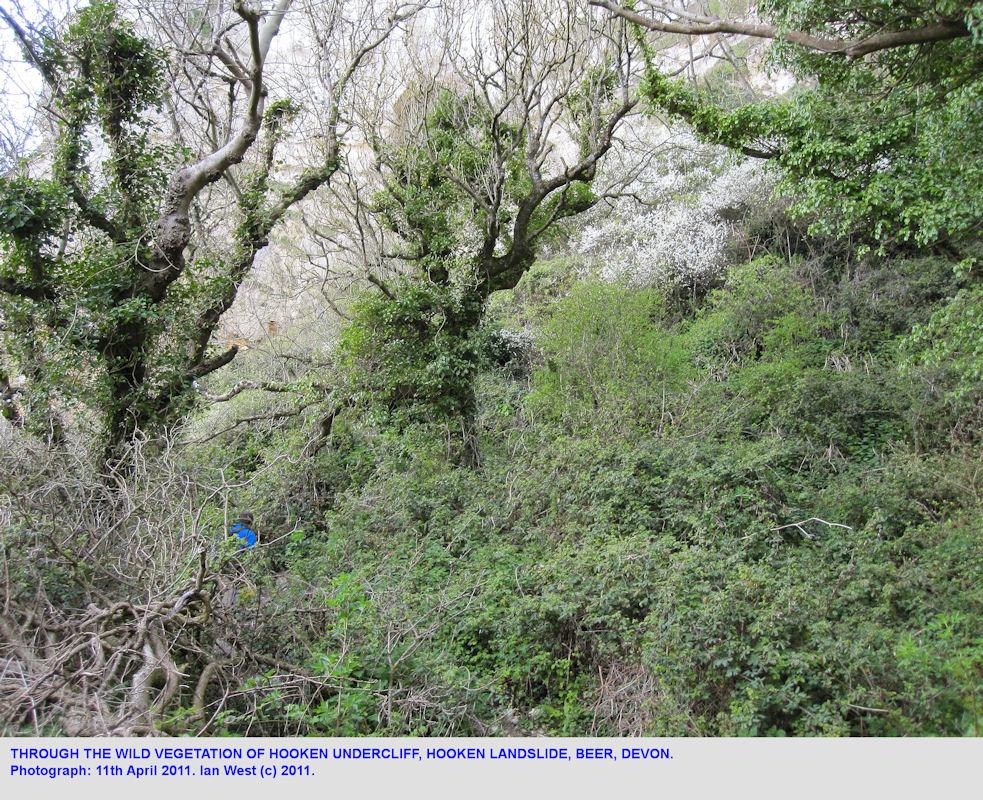 Vegetation on the Hooken Cliff Landslide, Beer, East Devon, 11th April 2011