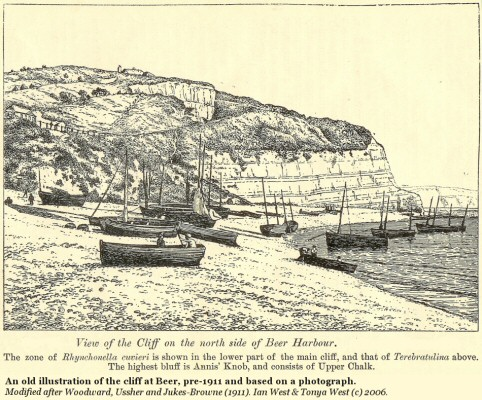 An old illustration of the Chalk cliffs at Beer Harbour and Beer Beach, East Devon