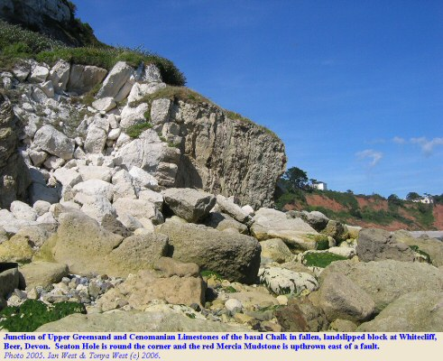 Junction of Upper Greensand and Cenomanian Limestones in a fallen block at Whitecliff, east of Beer, East Devon