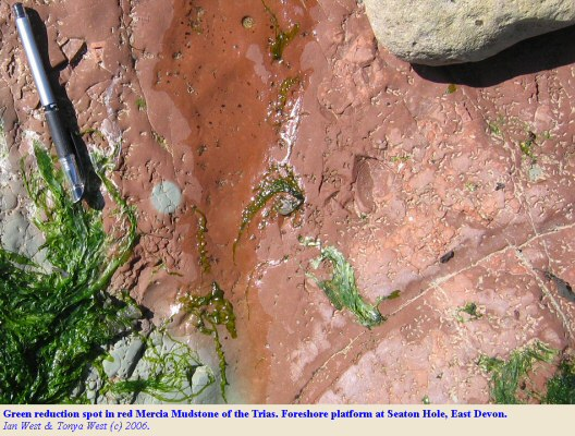 Green reduction spot in red, Triassic, Mercia Mudstone, Seaton Hole, near Beer, East Devon