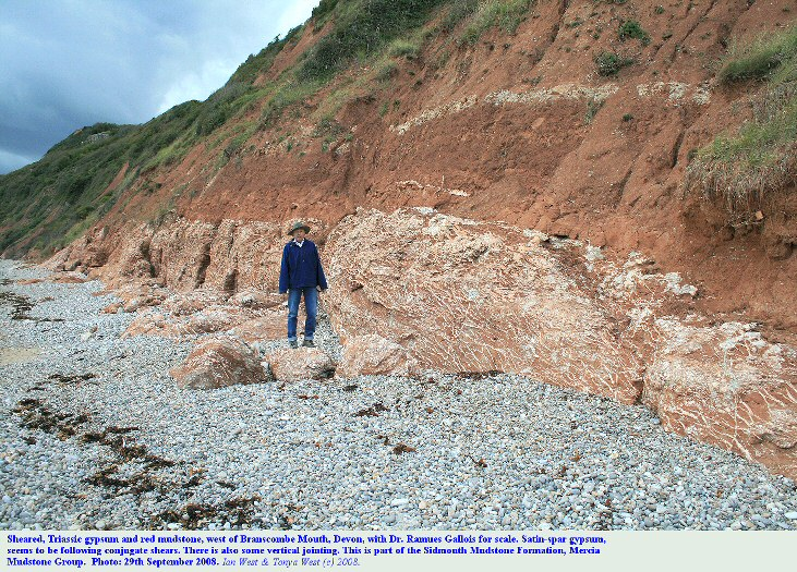 Sheared gypsum and mudstone, Sidmouth Mudstone Formation, Mercia Mudstone, Trias, west of Branscombe Mouth, near Beer, Devon, with Ramues Gallois