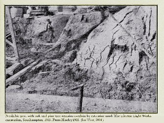 Peat with trunks of oak and pine and overlain by estuarine mud, at the Electric Light Works excavation, Southampton, 1903