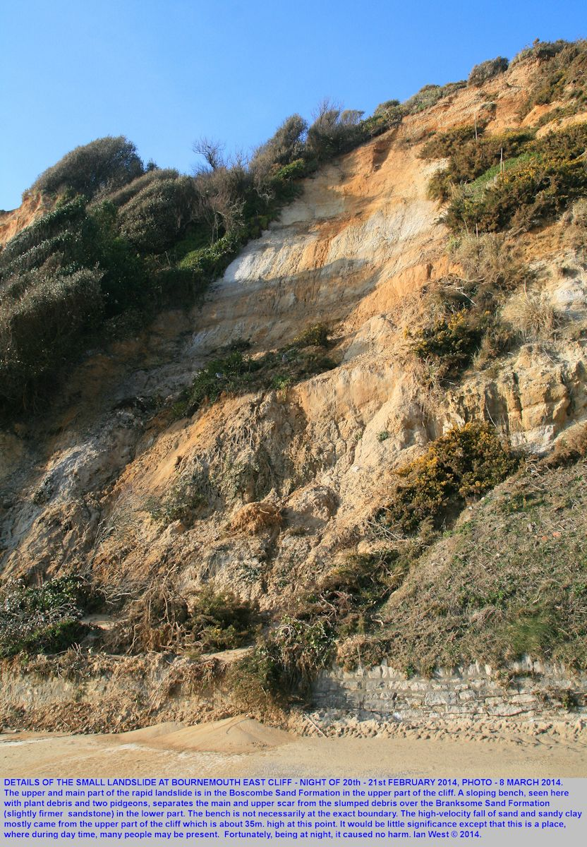 A vertical view of the small, steep landslide site  where Boscombe Sand material fell over Branksome Sand Formation, east of Bournemouth Pier, Dorset, photograph 8th March 2014