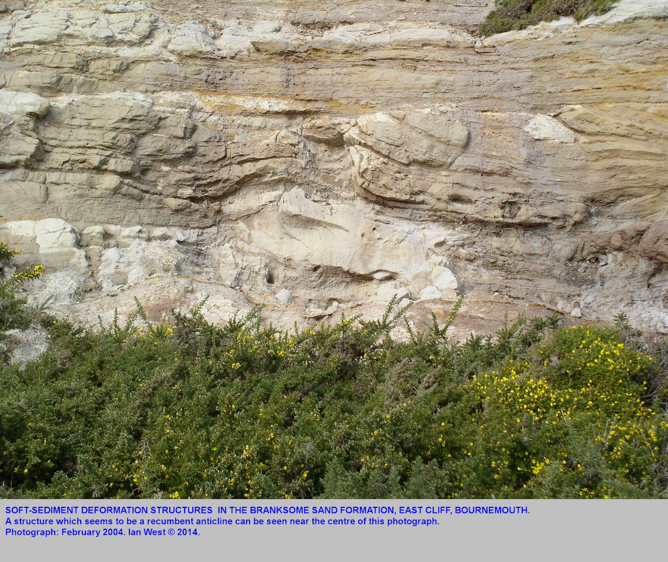 A recumbent anticline, one of the soft-sediment deformation structures in the high Branksome Sand Formation (Bournemouth Marine Beds, East Cliff, Bournemouth, Dorset, photographed in 2004