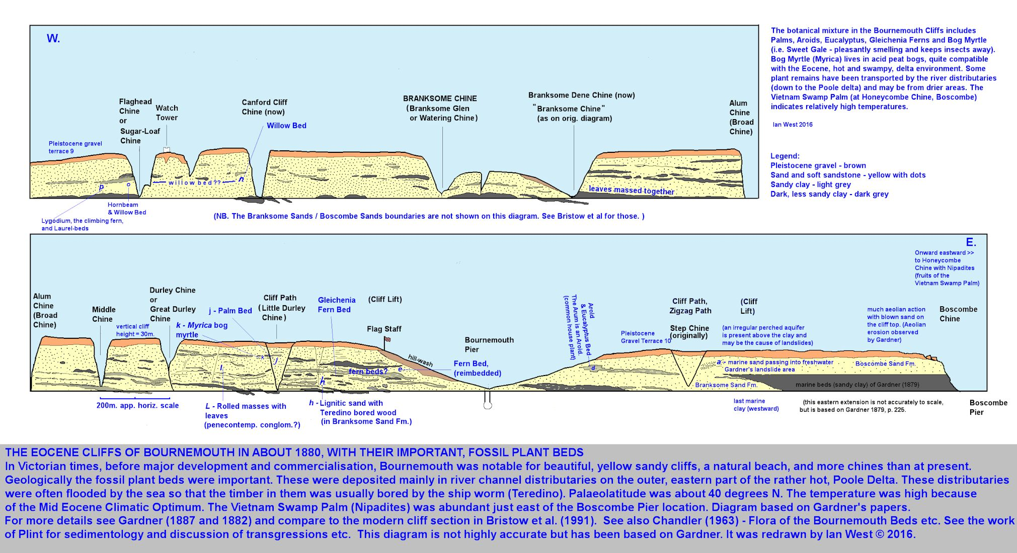 An east-west cliff diagram of the coast between Boscombe Pier and Canford Cliffs, Bournemouth, Dorset, showing simple geology of the Eocene, Branksome Sand Formation and Boscombe Sand Formation, and with data on fossil plant occurrences, largely after Gardner, 1879 and 1882