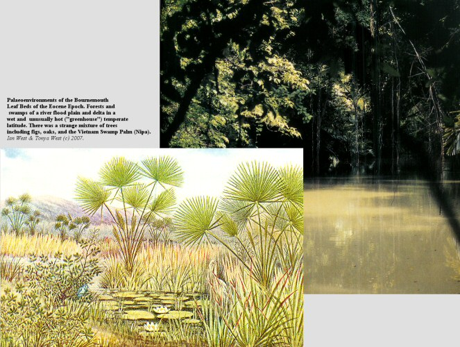 The hot, wet, forest and delta-swamp palaeoenvironments in which the Bournemouth leaf beds of the Eocene originated (reconstructions, based partly on Webster Smith ,1931),