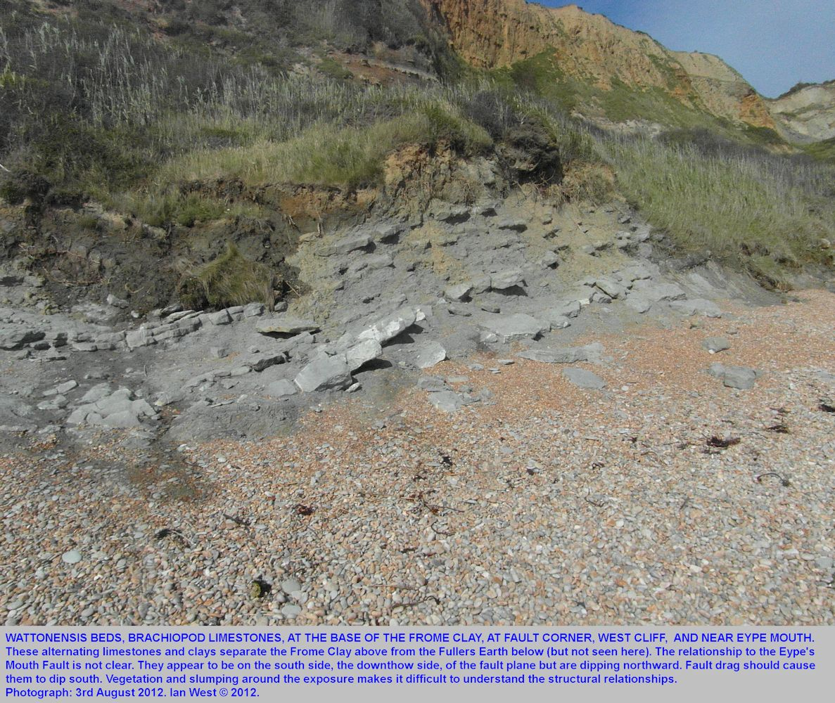 Wattonensis Brachiopod Beds at Fault Corner, near Eype's Mouth, Bridport area, Dorset in August 2012
