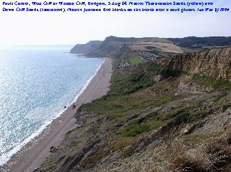 View across Fault Corner, West Cliff, Bridport, Dorset