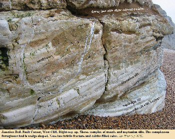 Closer view of block of the Junction Bed on the beach at Fault Corner, West Cliff, West Bay, Bridport, Dorset