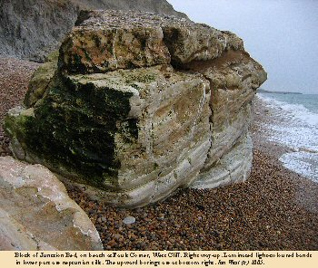 Block of the Junction Bed on the beach at Fault Corner, West Cliff, West Bay, Bridport, Dorset