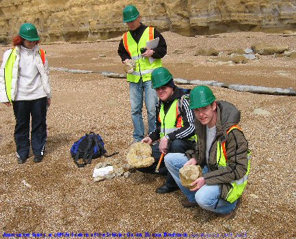 Ammonites found by LSBU students in a rock fall of Inferior Oolite at Burton Bradstock, near Bridport, Dorset, April 2005
