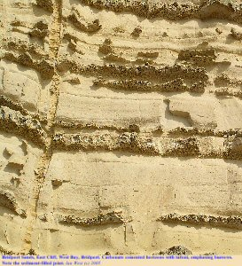 Bridport Sands, West Bay, Bridport, Dorset, showing honeycombe weathering (tafoni) and a sediment-filled joint