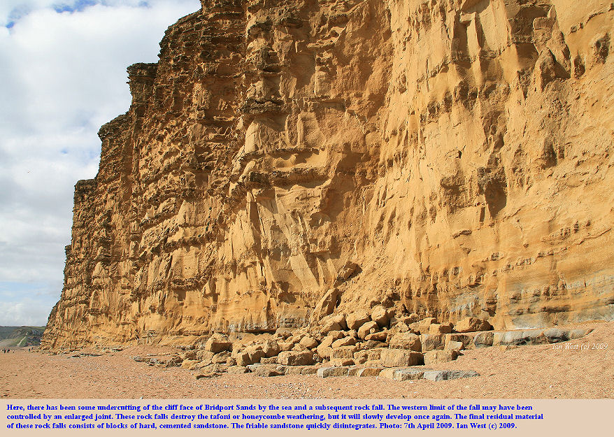 A rock fall from the cliff face of Bridport Sand, West Bay, Bridport, Dorset, destroys tafoni or honeycombe weathering, photo 7th April 2009
