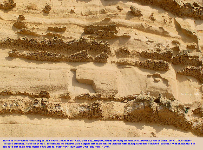 Tafoni or honeycombe weathering, high in the cliff of Bridport Sands, West Bay, Bridport, Dorset, photo 2005