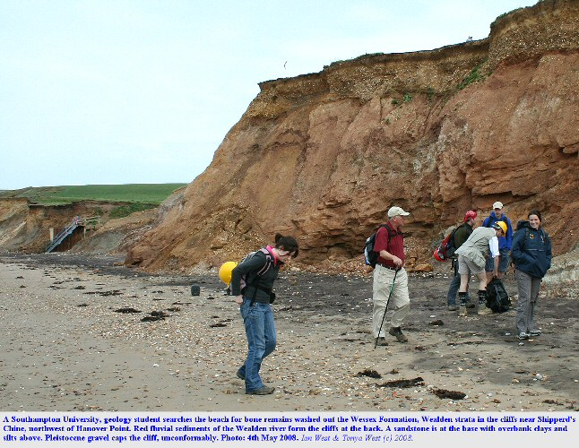 Dinosaur bones are sometimes washed out onto the beach from the Wealden cliffs of the Isle of Wight, and a search commences here, near Hanover Point, 4th May 2008
