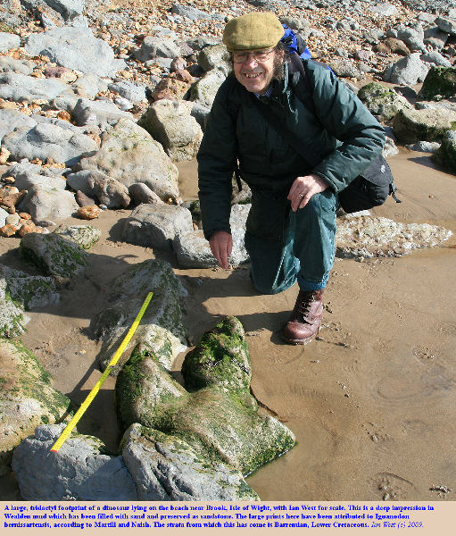 A large dinosaur footprint, preserved in Lower Cretaceous, Wealden sandstone, Brighstone Bay, Isle of Wight, with Ian West for scale, 11 March 2009