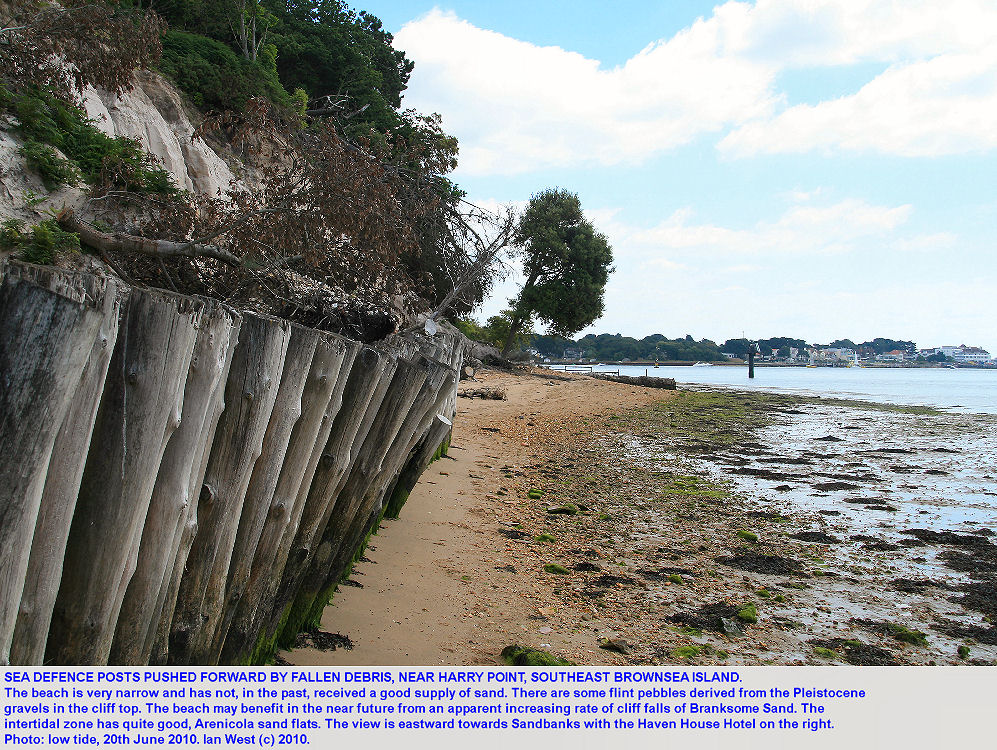 Sea defence posts near Harry Point and at the southeastern cliffs of Brownsea Island, Poole Harbour, Dorset, are sloping because cliff debris has fallen behind them, 2010