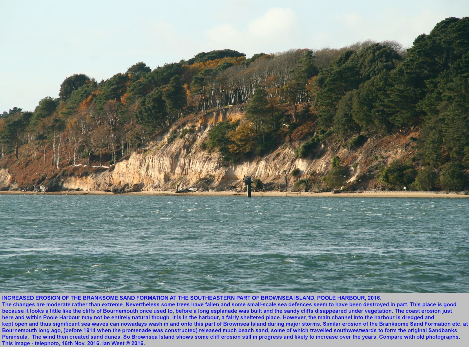 Erosion of the cliff of Branksome Sand Formation at the southeastern corner of Brownsea Island, Poole Harbour, Dorset, UK, as seen on the 16th November 2016