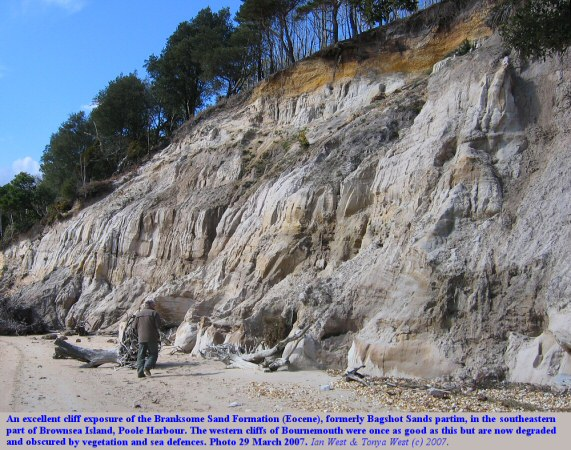 Branksome Sand Formation in the cliff in the southeastern part of Brownsea Island, Poole Harbour, Dorset,UK