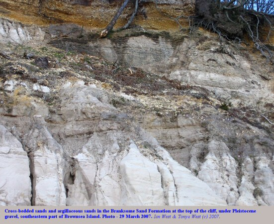 Cross-bedded Branksome Sand Formation in the clifftop, and under Pleistocene gravel, in the southeastern part of Brownsea Island, Poole Harbour, Dorset,UK