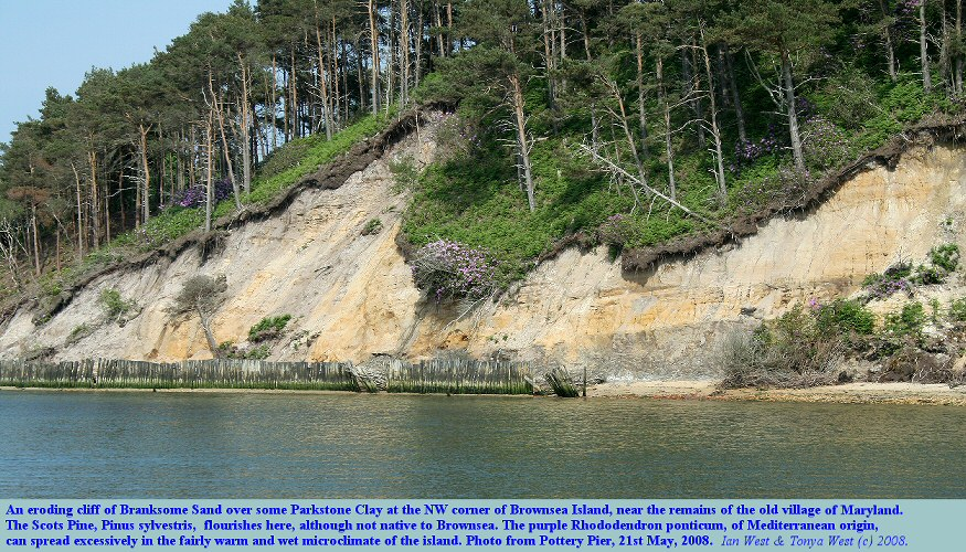An eroding cliff of Branksome Sand over Parkstone Clay at the northwest end of Brownsea Island, Poole Harbour, Dorset, UK, May 2008