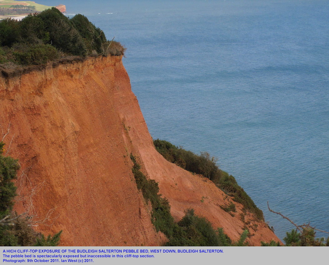 The Budleigh Salterton Pebble Bed in the cliff top, West Down, Budleigh Salterton, Devon, 2011
