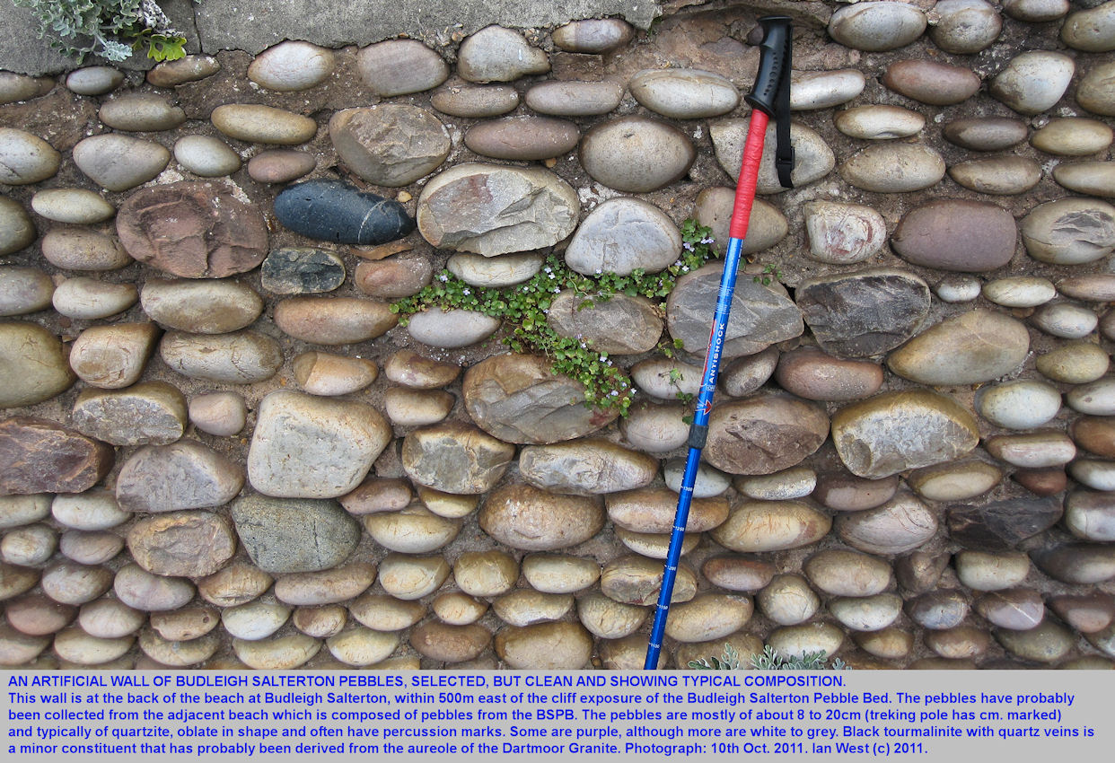An artifial wall of pebbles from the Budleigh Salterton Pebble Bed, Budleigh Salterton, Devon, 2011