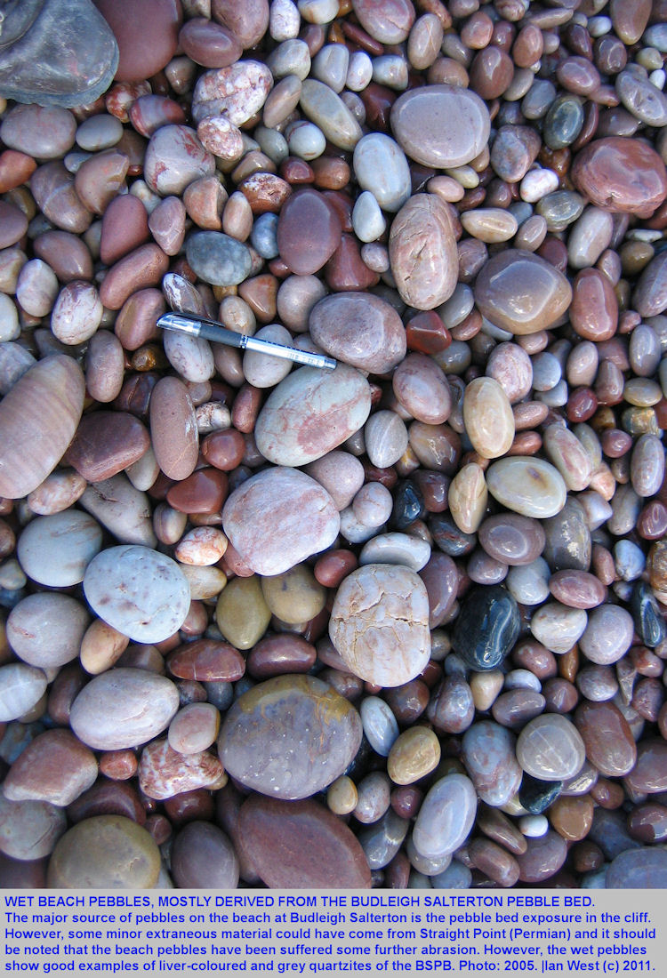 Wet pebbles on the beach Budleigh Salterton, Devon, mostly derived from the Budleigh Salterton Pebble Bed