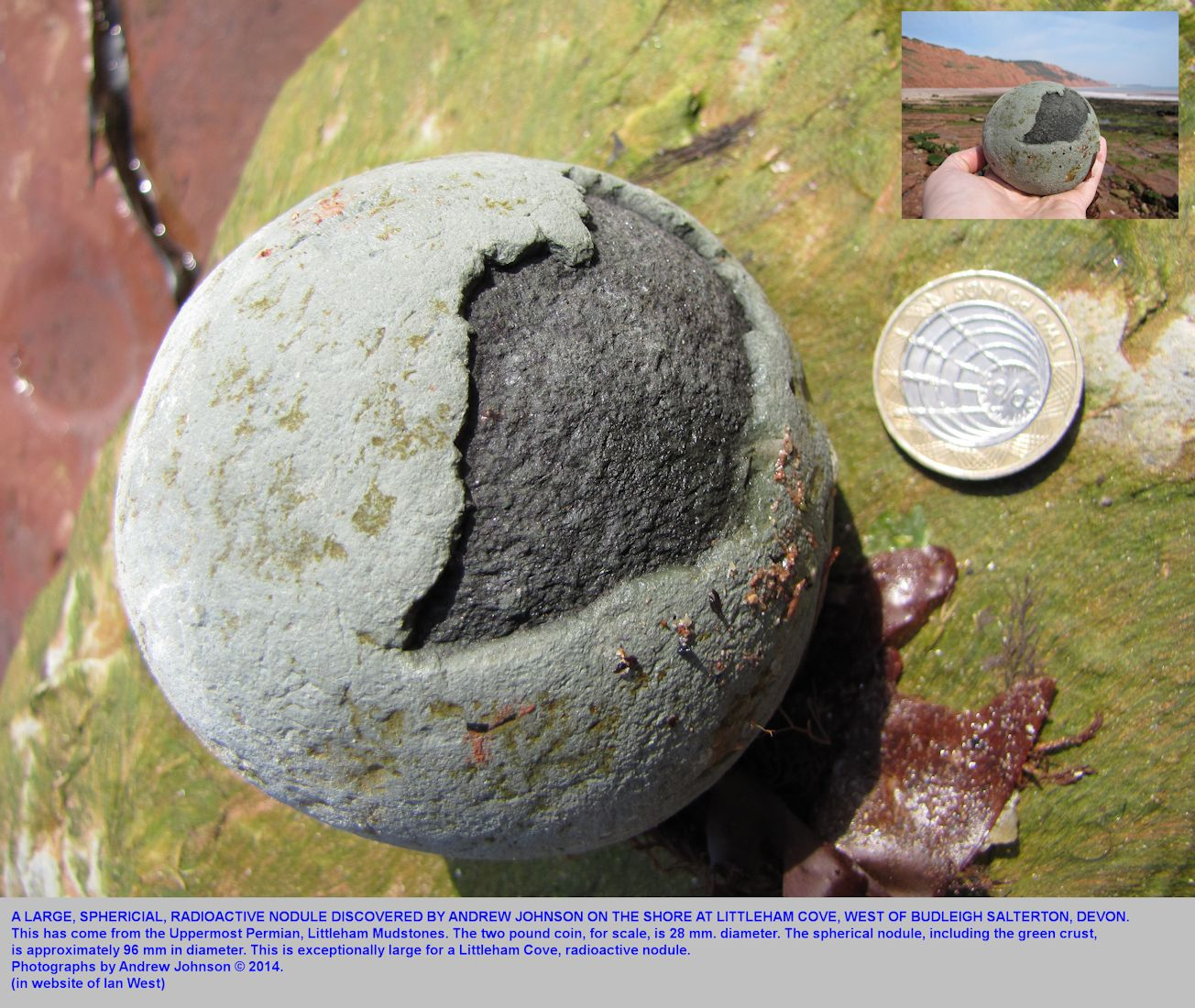 A very large spherical nodule of the dark radioactive type, from the Littleham Mudstones, Littleham Cove, Budleigh Salterton, Devon, found by Andrew Johnson, April 2014