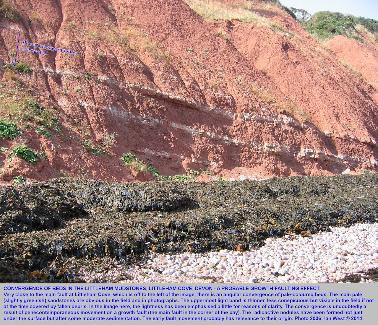 A wedge-out of some Permian mudstones as a result of growth-faulting in the corner of Littleham Cove, near Budleigh Salterton, Devon