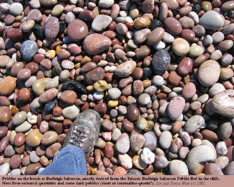 Pebbles of quartzite on the beach at Budleigh Salterton, Devon, foot for scale