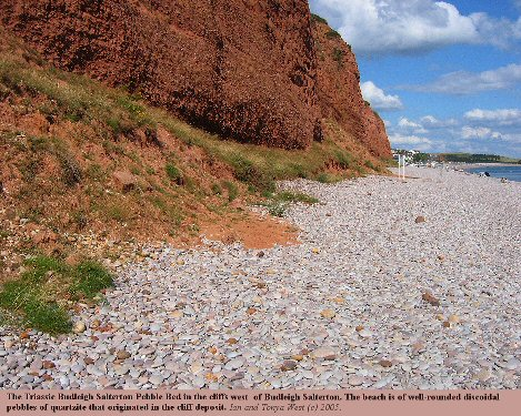 The Triassic Budleigh Salterton Pebble Bed in the cliffs west of Budleigh Salterton, Devon, with pebbles from the deposit forming the beach