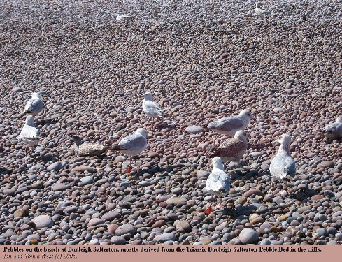 Pebbles of quartzite on the beach at Budleigh Salterton, Devon, gulls for scale