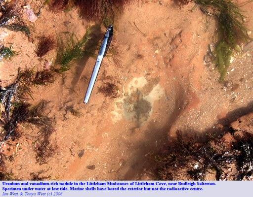 Radioactive nodule, finned type, of the Littleham Mudstones, under water at low tide, near Budleigh Salterton, Devon