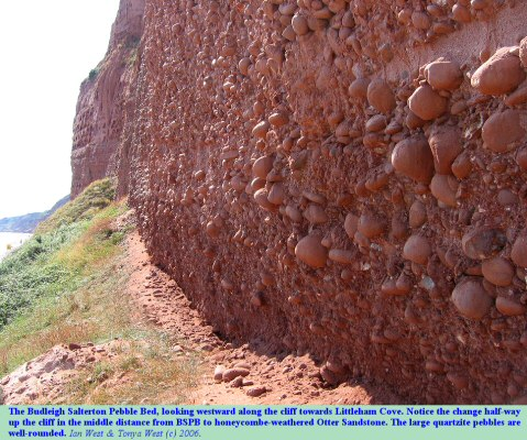The Budleigh Salterton Pebble Bed seen along the cliffs towards Littleham Cove, Devon