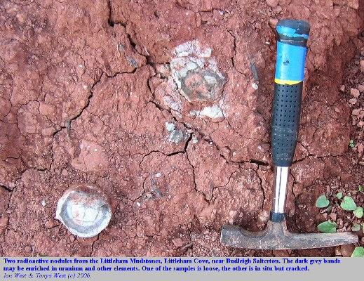 Two radioactive nodules from the Littleham Mudstones of Littleham Cove, west of Budleigh Salterton, Devon